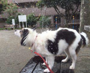 犬ドリルー2