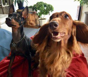愛犬写真 ショコ&ジャック