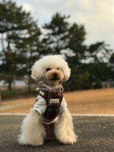愛犬写真 リッキー
