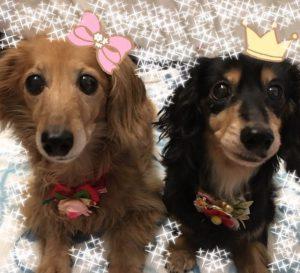 愛犬写真 奈々&夢