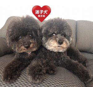 愛犬写真 クー&モコ