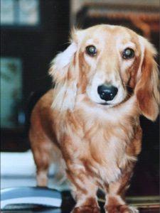 愛犬写真 タロウ