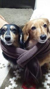 愛犬写真 ノノ、リリ
