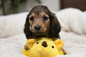 愛犬写真 Harry