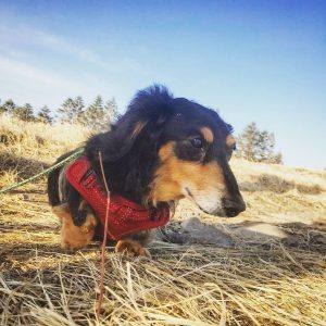 愛犬写真 マコロン