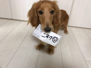 愛犬写真 小助