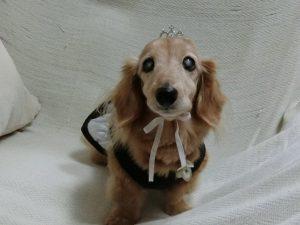 愛犬写真 メリー
