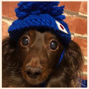 愛犬写真 COCOA
