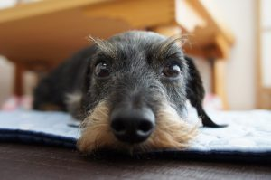 愛犬写真 なつ