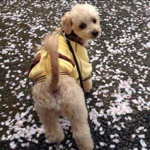 愛犬写真 アッシュ