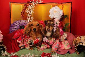 愛犬写真 ショコラ&モカ