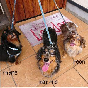 愛犬写真 ライム マリン レオン