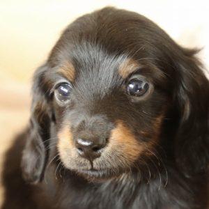 愛犬写真 メルモ
