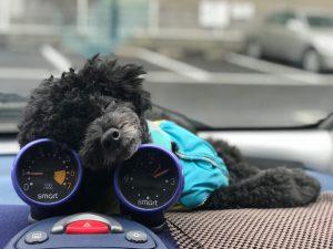 愛犬写真 Benz