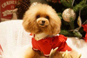 愛犬写真 Mocha