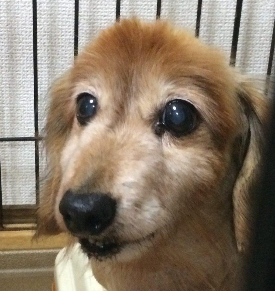 愛犬写真 リンダ