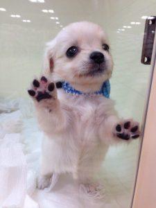 愛犬写真 あんず