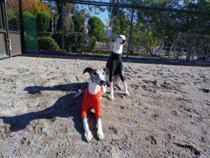 愛犬写真 VELOCE と ROSETTA