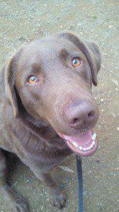愛犬写真 こはる