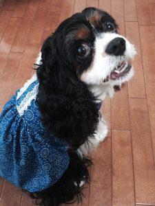 愛犬写真 ポッキー