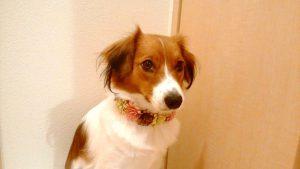 愛犬写真 ルートさん