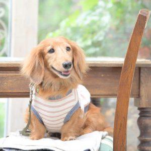 愛犬写真 バトー