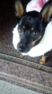 愛犬写真 Betty