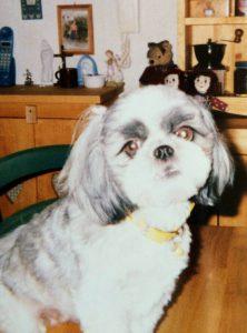 愛犬写真 ペコ