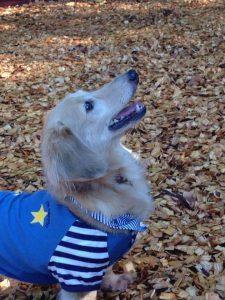 愛犬写真 アンディ