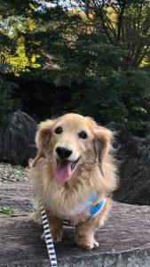 愛犬写真 チップ