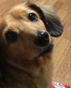 愛犬写真 らぶ