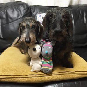 愛犬写真 スコッチとボア