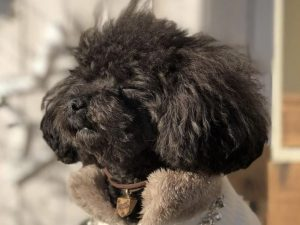 愛犬写真 アデル