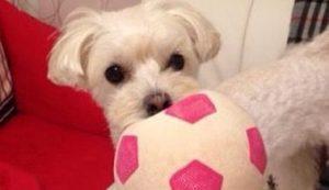 愛犬写真 プリン