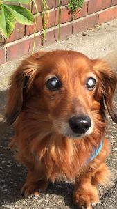 愛犬写真 ボビー