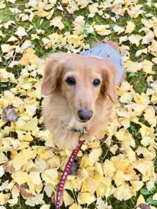 愛犬写真 ヴィヴィ