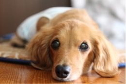 愛犬写真 ナナ