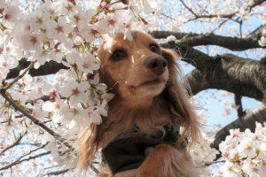 愛犬写真 ココペリ