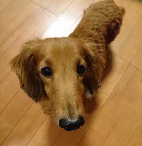 愛犬写真 ジョルノ
