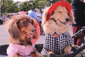 愛犬写真 ベティ・モコ