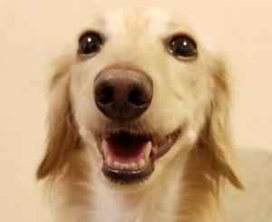 愛犬写真 ラブ