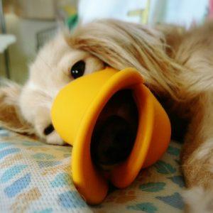愛犬写真 ぴーなっつ