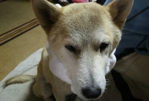 愛犬写真 未来(みく)ちゃん