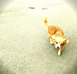 愛犬写真 めいちゃん。