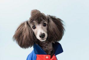 愛犬写真 福