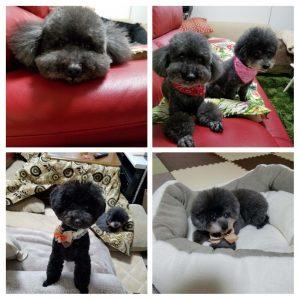 愛犬写真 リズ、ベッキー、イヴェル