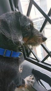 愛犬写真 maro
