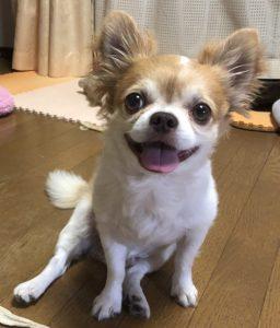 愛犬写真 シャルル