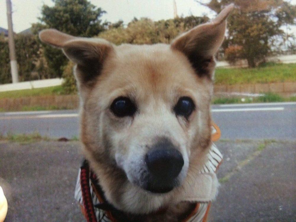 愛犬写真 コロ
