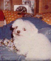 愛犬写真 メグ